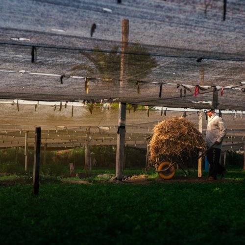 Farming in Bahrain